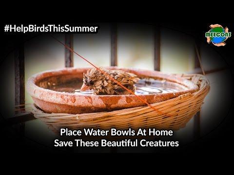 #HelpBirdsThisSummer Put Water Bowl for Birds This Summer
