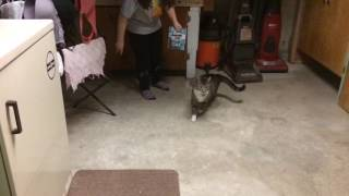 Cats Running In Slo-Mo???!!!