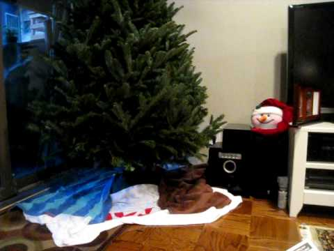 Part 1 of how to keep cats away from xmas trees