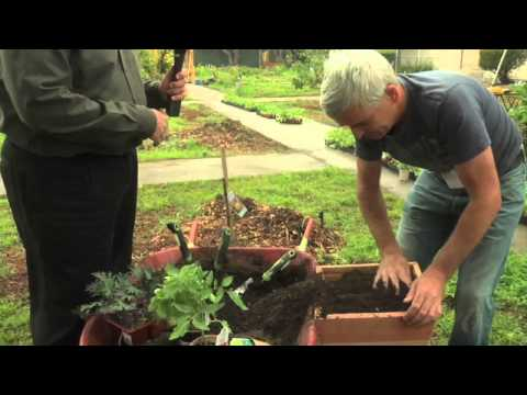 Good Food Day LA - Build a Planter Box Garden