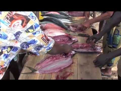 Women training on fish salting and sun-drying in São Tomé and Príncipe (in Portuguese)