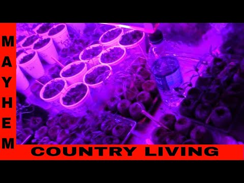 LED Red and Blue Spectrum Grow Light