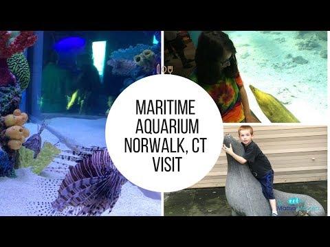 Maritime Aquarium Norwalk CT Visit