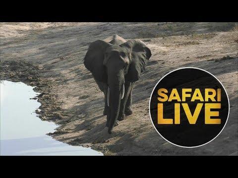safariLIVE - Sunrise Safari - June, 13. 2018