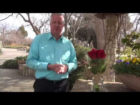 In the Garden with Dave Forehand: Keeping Roses Fresh