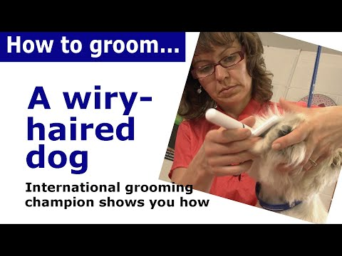 How to groom dog with wiry hair - dog grooming demonstration
