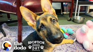 Very Special German Shepherd Puppy Finds A Brother Who Just Gets Him   The Dodo Adoption Day