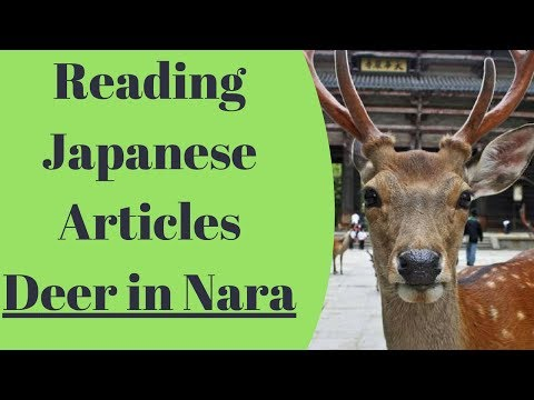 Learn Japanese - Improve through everyday study - Deer in Nara