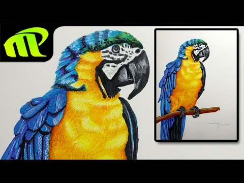 Colorful Parrot Drawing | By Mahesh Pendam