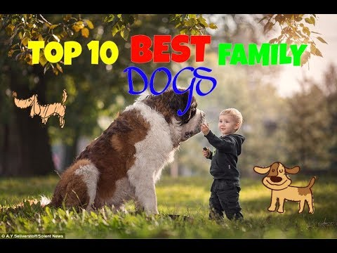 TOP 10 BEST FAMILY DOGS.