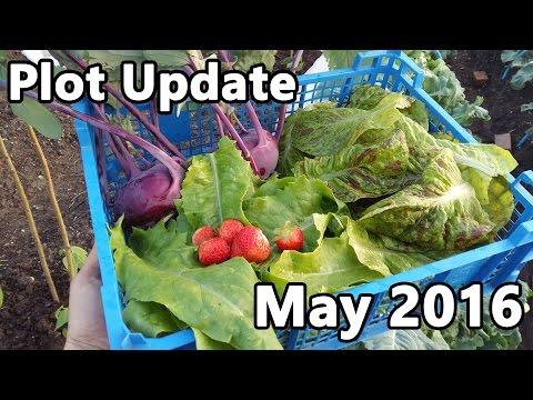 Plot Update - May 2016