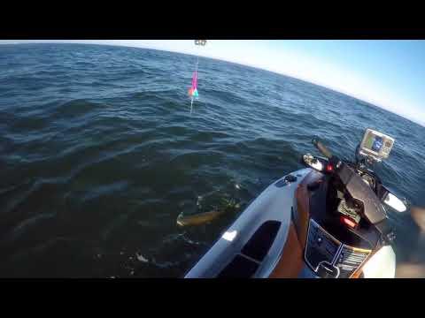 Ocean Jetski Salmon Fishing