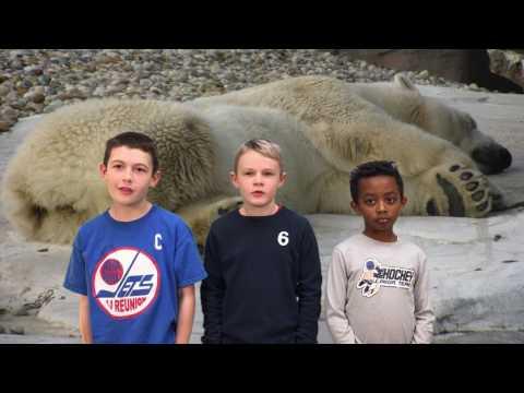 Help Us Save Polar Bears