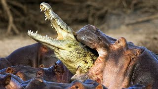 10 Animals That Hate Each Other