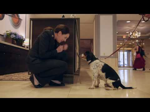 Fairmont Hotel Vancouver - Gone to the Dogs - Pets in Hotels