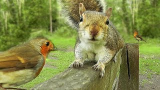 Videos To Watch With Your Cat : Birds and Squirrels on The Park Bench