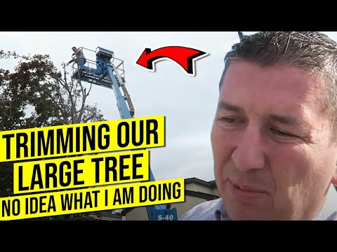 USING A CHERRY PICKER FOR THE FIRST TIME | TREE TRIMMING