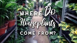Where DO your Houseplants come from?   Netherlands Wholesaler Houseplant Tour   Spring 2019
