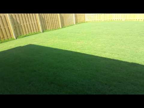 My Bermuda Grass Update