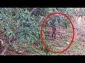 Animal Misterioso Aparece Na Mata No Interior De MG Causando Curiosidades