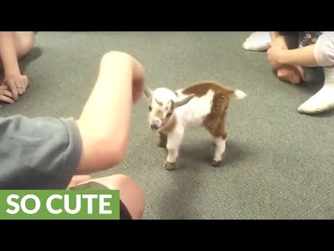 Kids thrilled to play with newborn baby goat