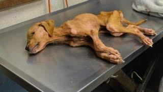 【感動実話】虐待され死の淵にいた子犬と自閉症の少年との出会い…。そこには奇跡がありました