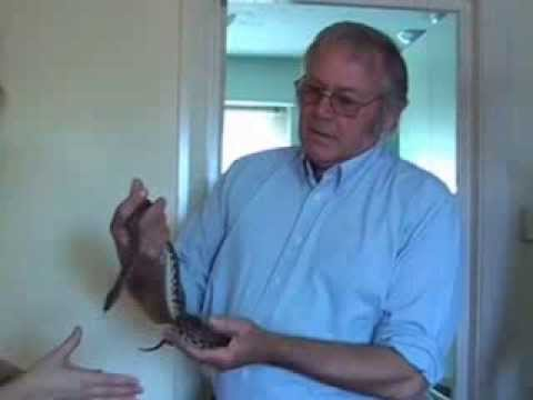 Fear of snakes cured [ophidiophobia] - watch Mark Tyrrell cure snake phobia...