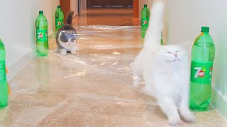 Cats vs Invisible Hurdles Compilation
