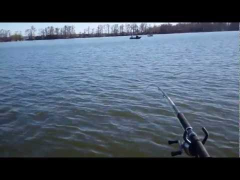 Reelfoot Lake March 10 Chippy Solo