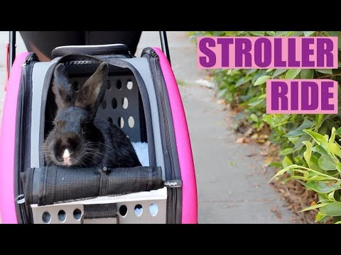 RABBIT GOES FOR A STROLLER RIDE!