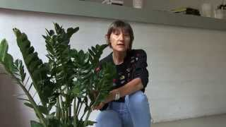 Zamioculcas - concimazione piante da interno