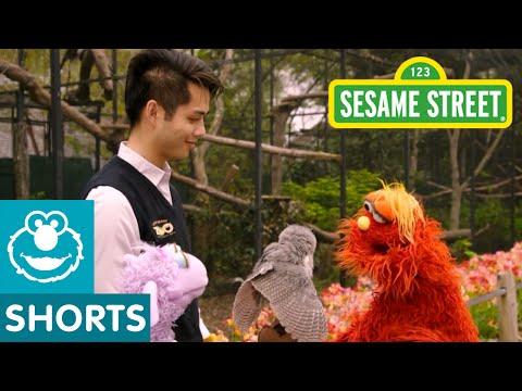 Sesame Street: Murray Learns About Birds