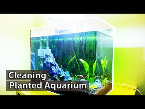 6 Easy Steps to Clean Planted Aquarium