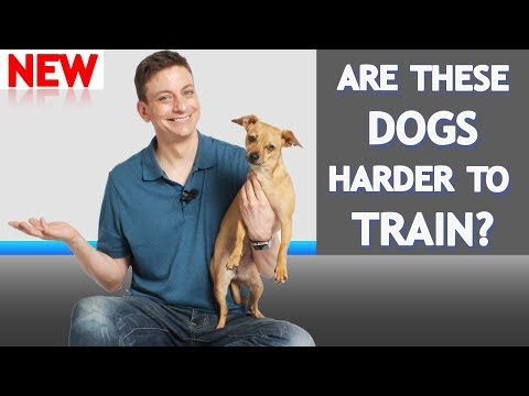 What's Different About Training Small Dogs?