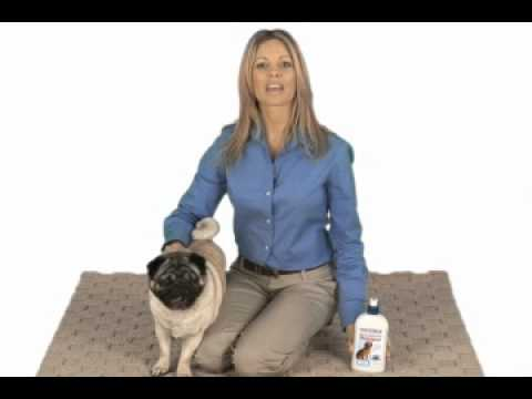 Causes of Your Dog's Hot Spots and How to Treat Them