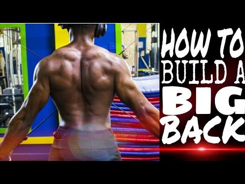 HOW TO BUILD COBRA BACK ( BEGINNER )
