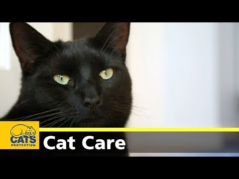 Adopting a cat with young children - Cats Protection's Kids and Kitties