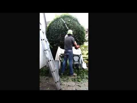Bay Tree Pruning Extended Version 13 12 2015