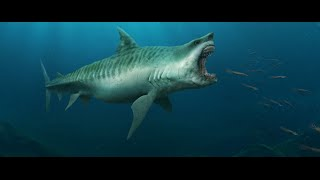 Is The Megalodon Still Alive?