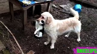 Dog Carries Cat To His Owner