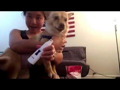 Dog Nail Grinder Review
