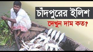 Ilish fish in chandpur area bangladesh