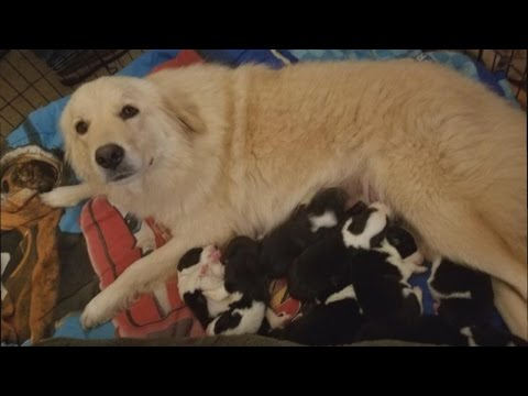 Dog That Lost Babies In Fire Gets 8 Orphaned Puppies To Care For