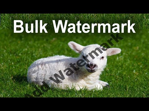 How to Add Watermark to Multiple Pictures with Automate batch in Photoshop CS6