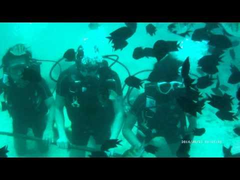 Scuba Diving Pandan Island,Palawan
