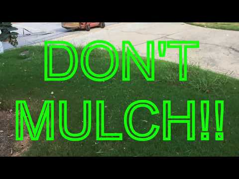 How to Fall and Winter care for Bermuda grass lawns