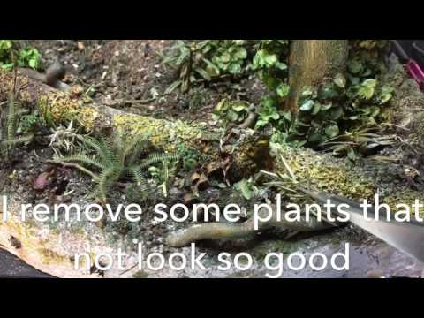 Making plants for a jungle diorama in 1/35.