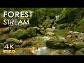Download  4K Forest Stream - Relaxing River Sounds - No Birds - Ultra HD Nature Video -  Relax/ Sleep/ Study MP3,3GP,MP4