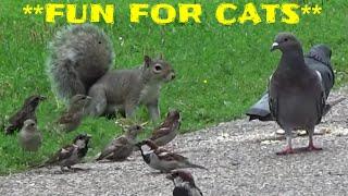 Video für Katzen - Vögel, Eichhörnchen, Kaninchen, Chipmunks, Tauben,