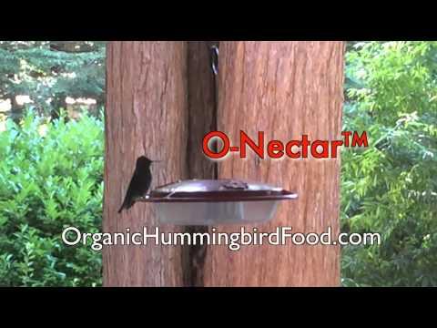 O-Nectar™ Organic Hummingbird Food